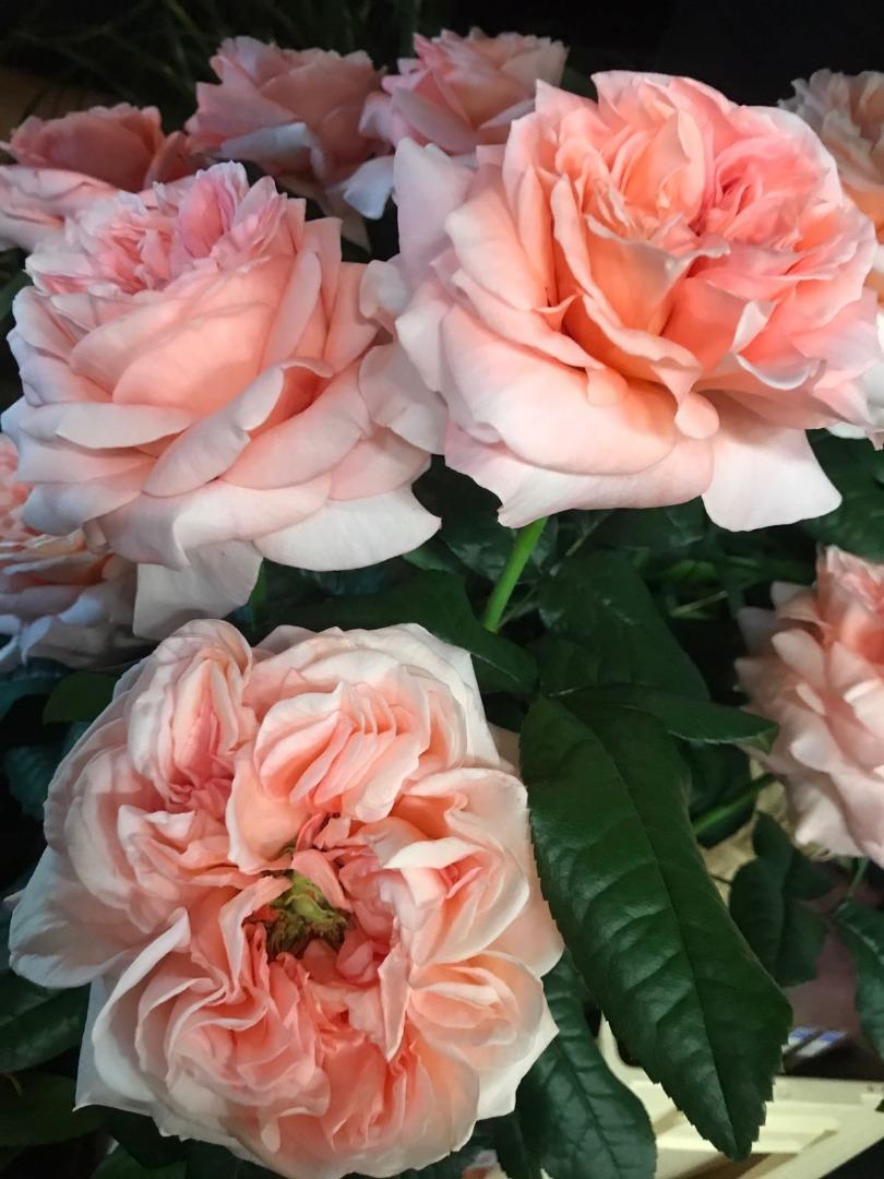 Orangerie 21